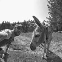 Un burro y un animal